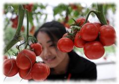 Приятное лицо китайских фруктов и овощей