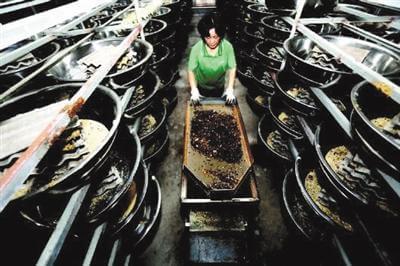 В провинции Шаньдун открылся центр обработки кухонных отходов с помощью тараканов